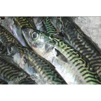 caballa-blanes-pescadoacasa