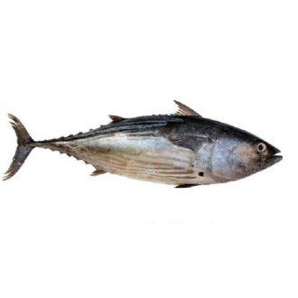 bonito-2kg-pescado-a-casa