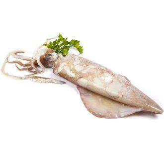 calamar-nacional-200-300gr-pescadoacasa-jpg