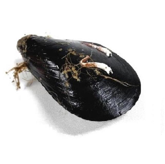 mejillon-gallego-pescadoacasa