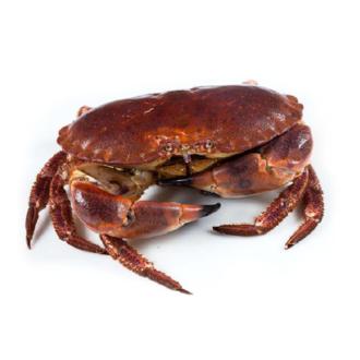 Buey-de-mar-500gr-pescadoacasa