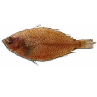 pelaya-grande-pescadoacasa