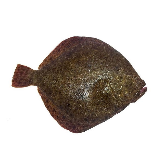 rodaballo-1,5kg-pescadoacasa