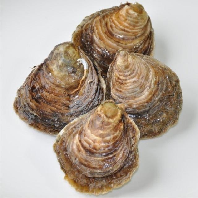 comprar-ostras