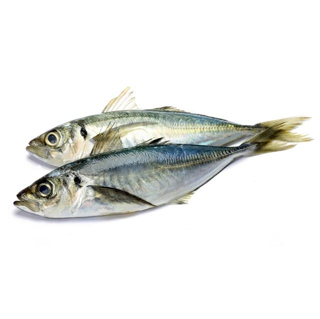 jurel-vilanova-pescadoacasa