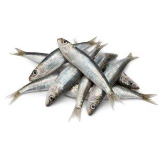sardina-costa-pescadoacasa