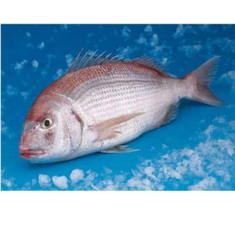 pajel-salvaje-pescadoacasa