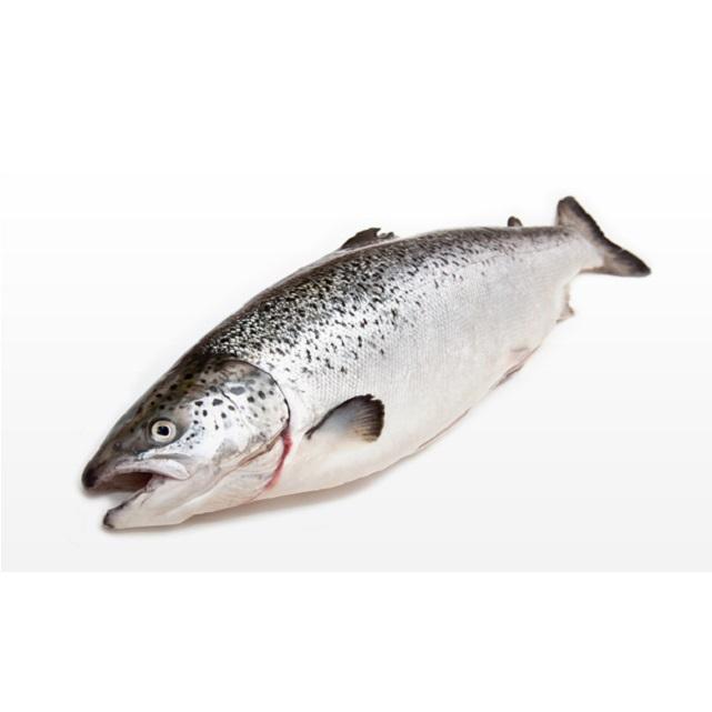 salmon-4kg-pescadoacasa