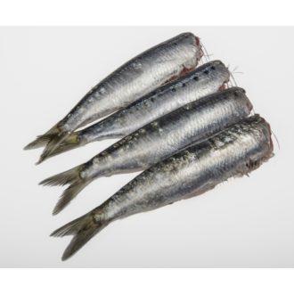 sardina-eviscerada-y-sin-cabeza