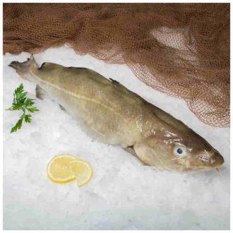 bacalao-fresco