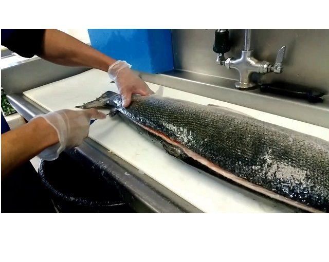 Como filetear el salmón