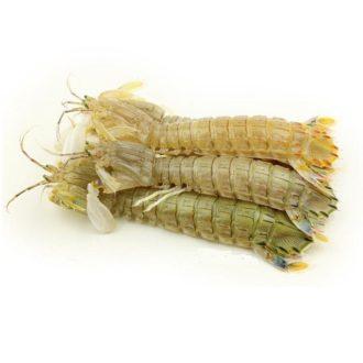 galeras-marisco-pescadoacasa