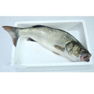 lubina-salvaje-1kg-pescadoacasa