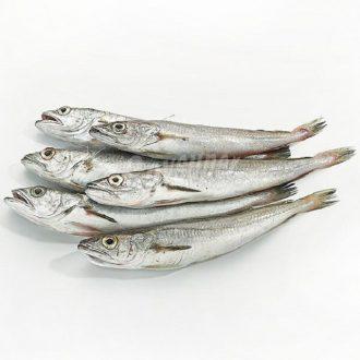 pescadilla-pijota-lluset-pescadoacasa
