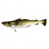 bacalao fresco 1,5kg