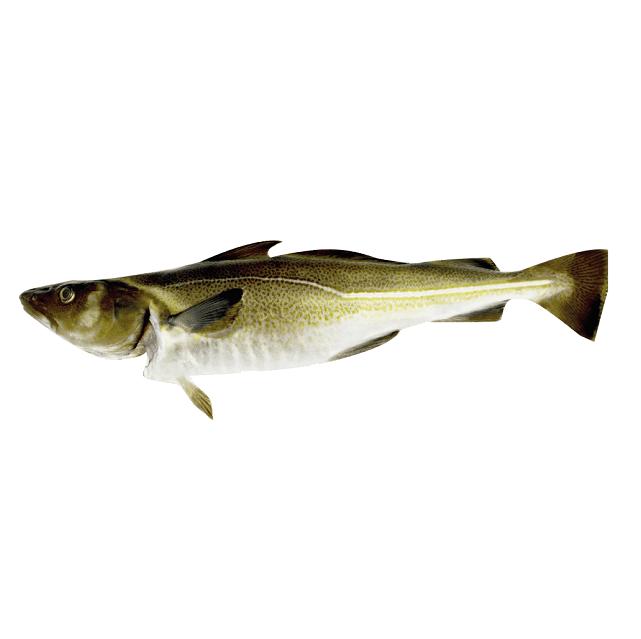 bacalao-fresco-1,5kg-pescado-a-casa