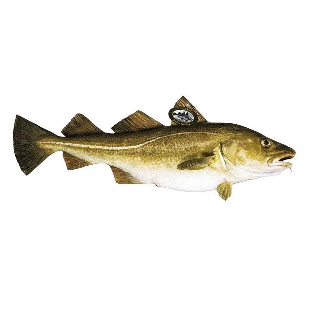 bacalao-fresco-2kg-pescadoacasa