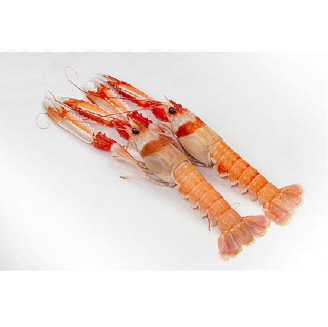 cigala-fresca-grande-pescadoacasa