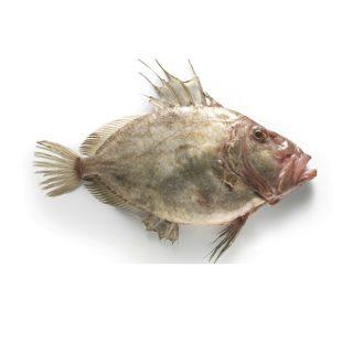 gallo-san-pedro-pescadoacasa-jpg