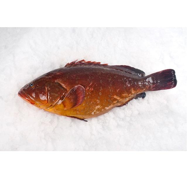 mero-fresco-pescadoacasa