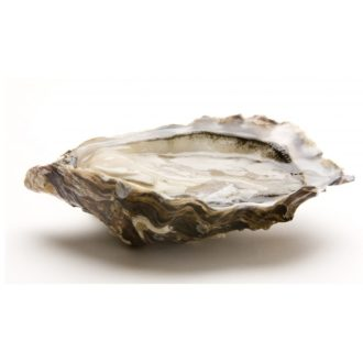 ostra-amelie-pescadoacasa-jpg