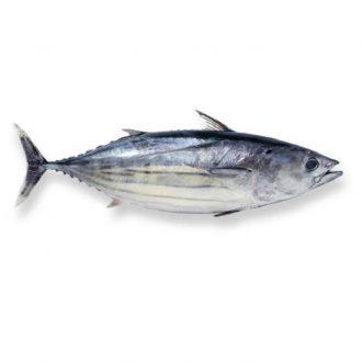 Bonito-pescado-a-casa