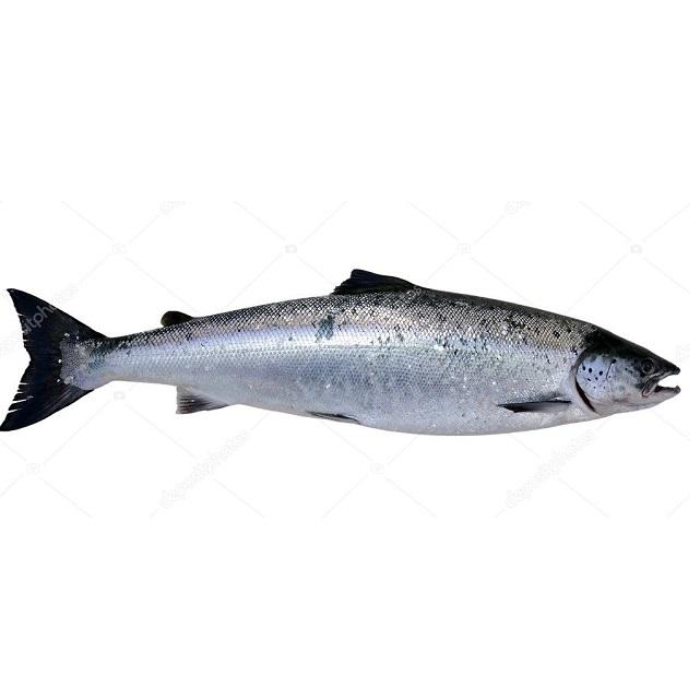 salmon-ecológico-3kg-pescadoacaasa