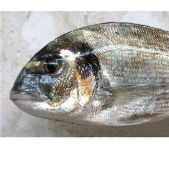 dorada-salvaje-2kg-pescadoacasa