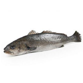corvina-2kg-pescado-a-casa