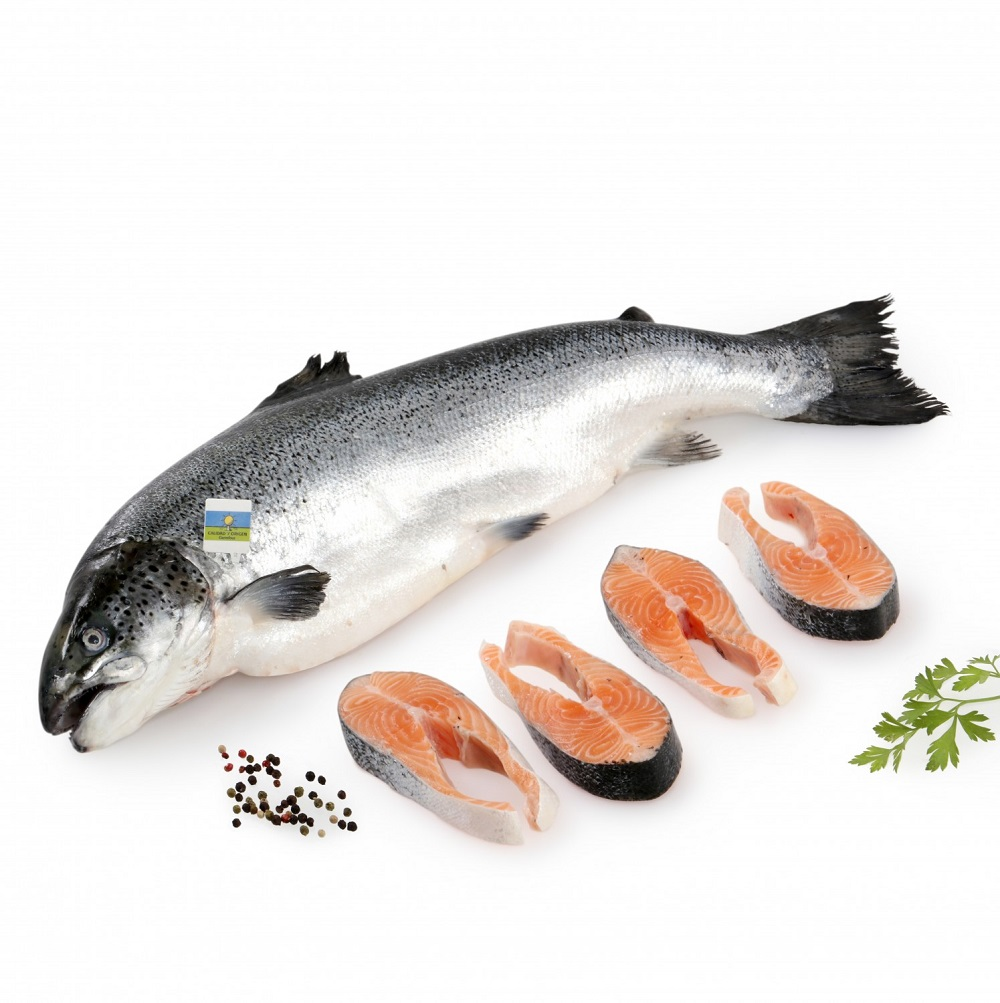 salmon eco