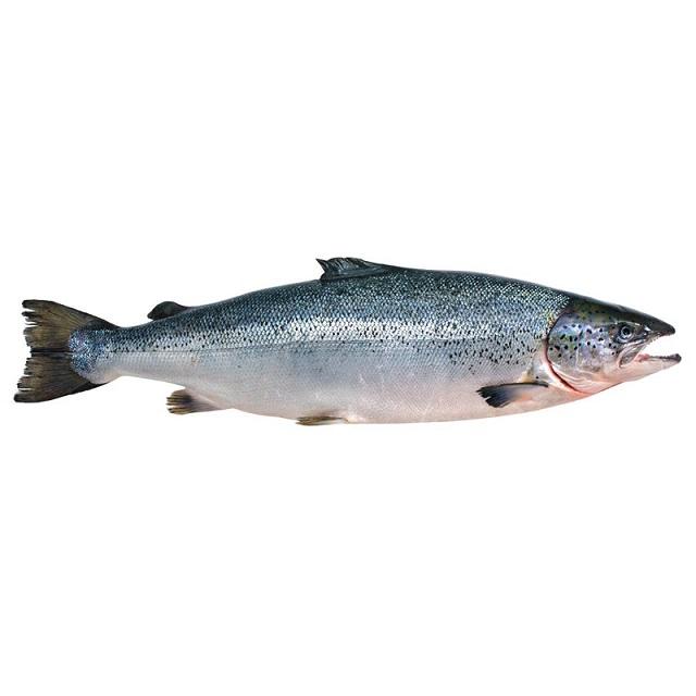 salmon-entero-4kg-pescado-a-casa