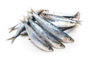 sardina fresca