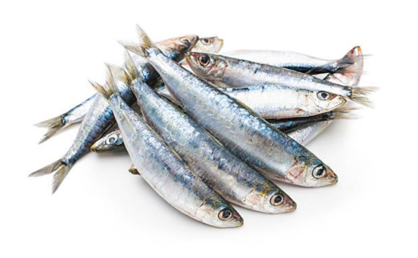 ¿Tienes dudas de cómo comprar sardina fresca?