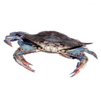 cangrejo-azul-pescado-a-casa
