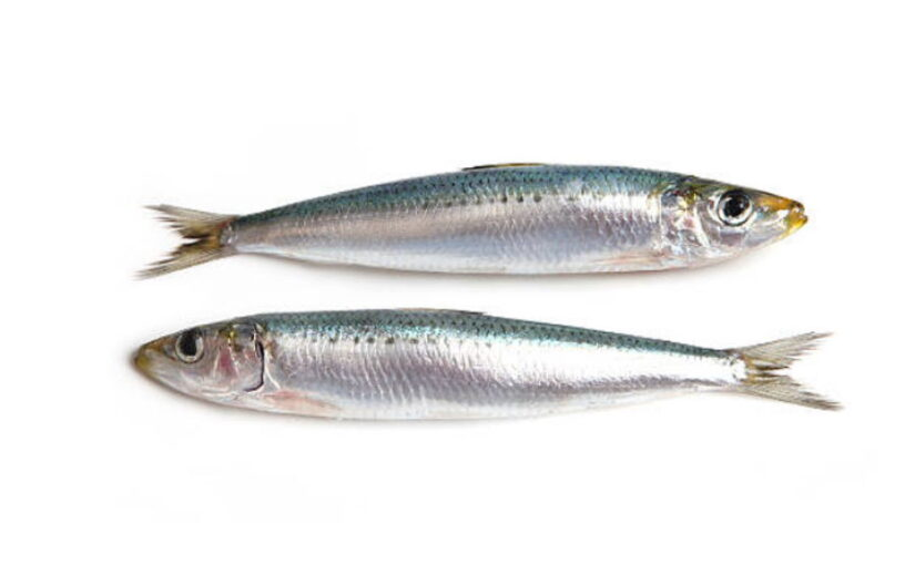Aprende cómo diferenciar la sardina y el boquerón