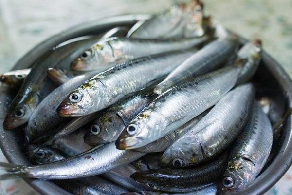 Principales diferencias de la sardina y el boquerón