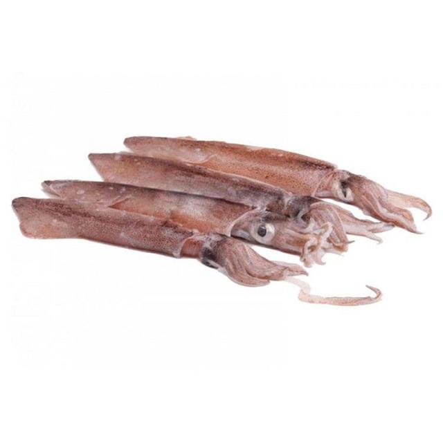 calamar-pequeño-patagonico
