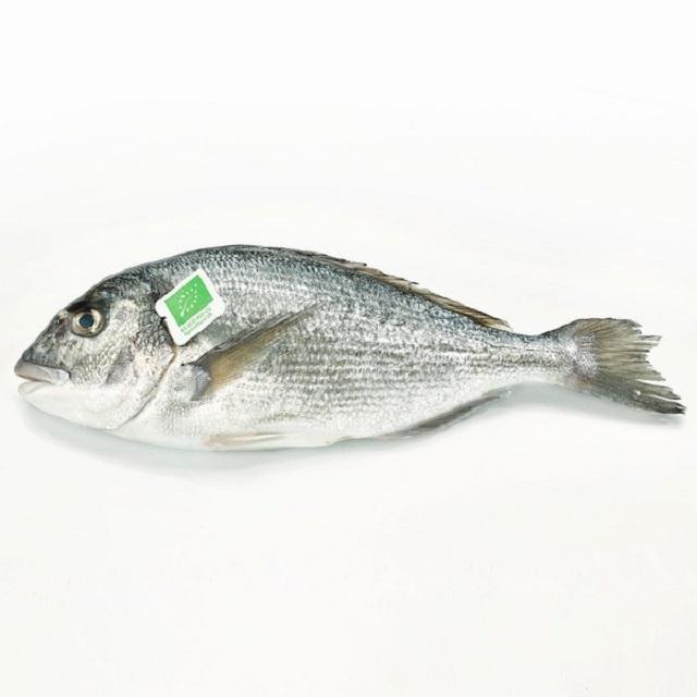 dorada-ecológica-pescadoacasa