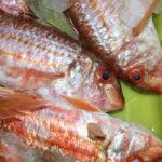 ¿Sabes reconocer el pescado gallego fresco?